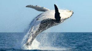 whale watch maui free adventures