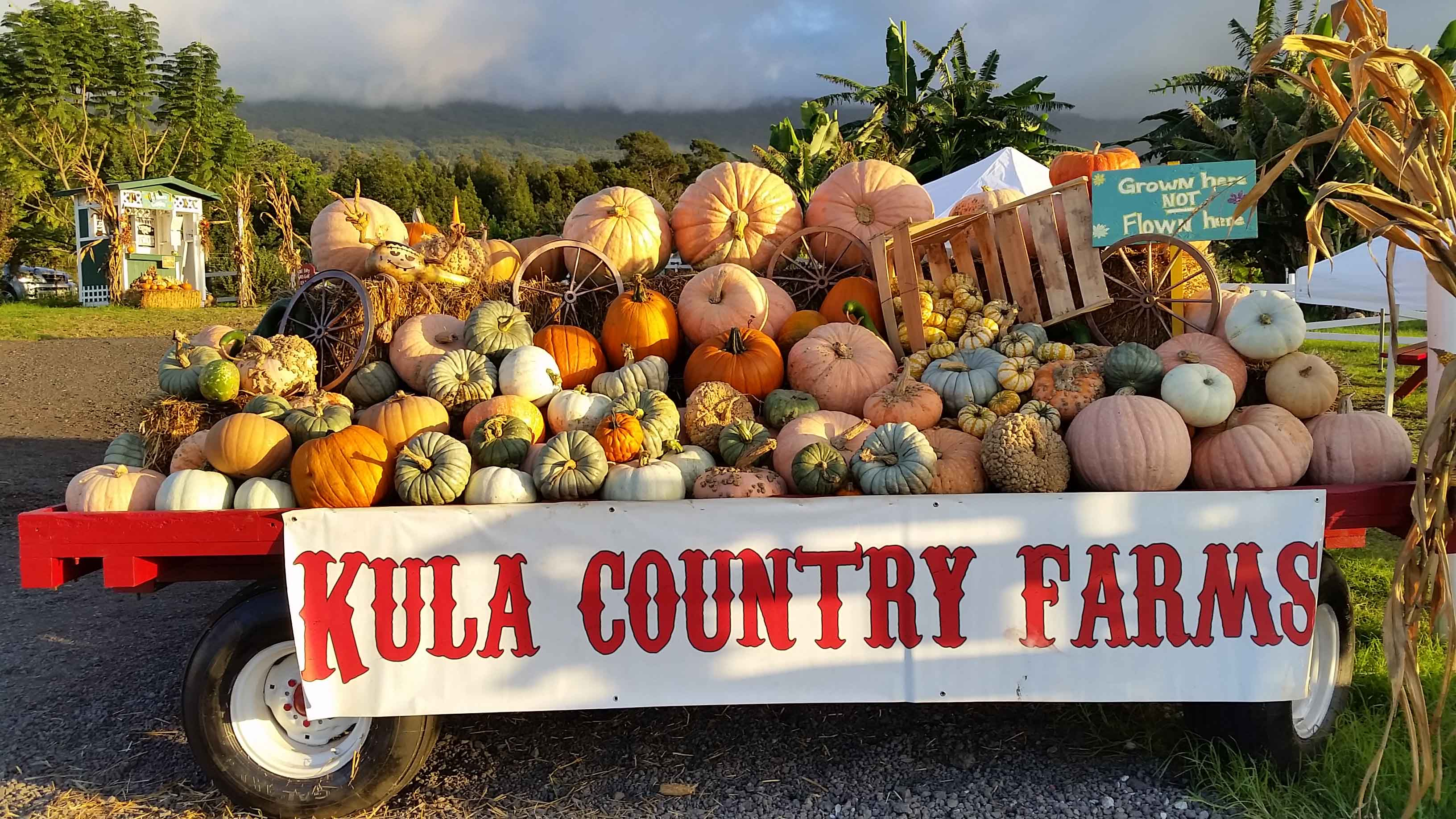 Bountiful display of pumpkins and gourds on truck flatbed